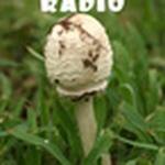 Dilligaf Radio